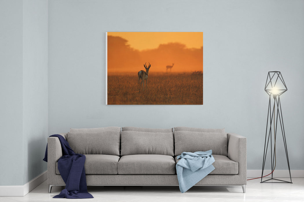 Springbok Antelope  African Wildlife Background  Sunset Gold And Colors In Nature Canvas Wall Art Print