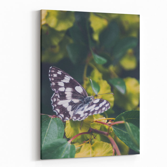 Butterfly, Flower, Colorful, Nature, Spring, Wildlife, Leaf Canvas Wall Art Print