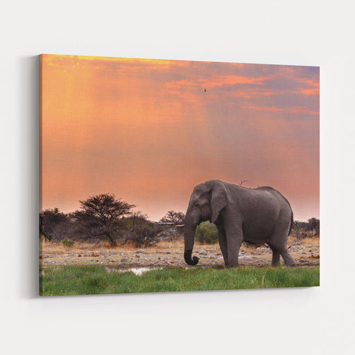 Portrait Of African Elephants With Dusk Sky, Etosha National Park Ombika Kunene, Namibia, Wildlife Photography Canvas Wall Art Print