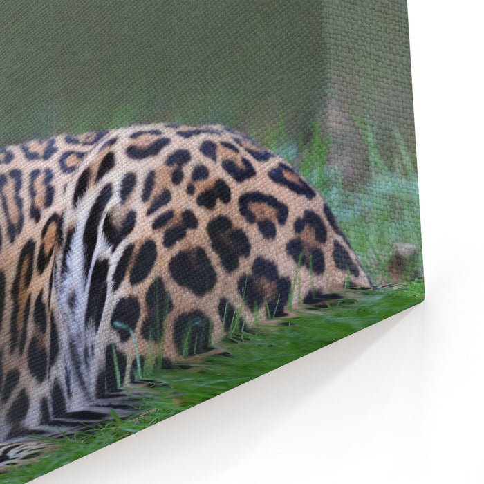 Closeup View Of A Jaguar Panthera Onca Canvas Wall Art Print