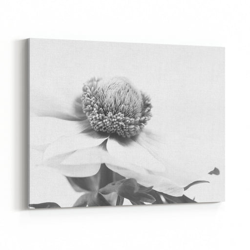 Anemone, Closeup, Macro, Monochrome, Blackandwhite Canvas Wall Art Print