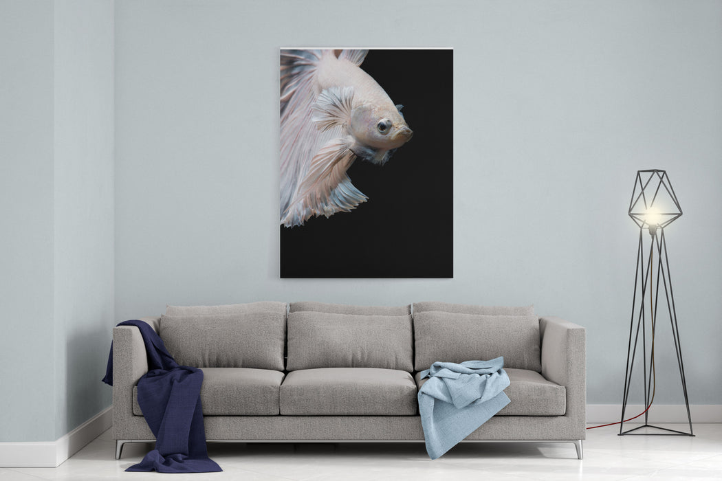 Betta Fish,Siamese Fighting Fish In Movement Isolated On Black Background Canvas Wall Art Print