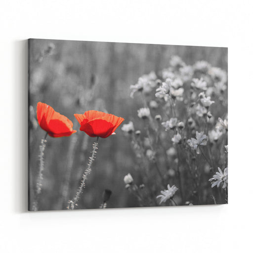 Red Poppy Flowers On Spring Agricultural Field Surrounded By Black And White Background Canvas Wall Art Print