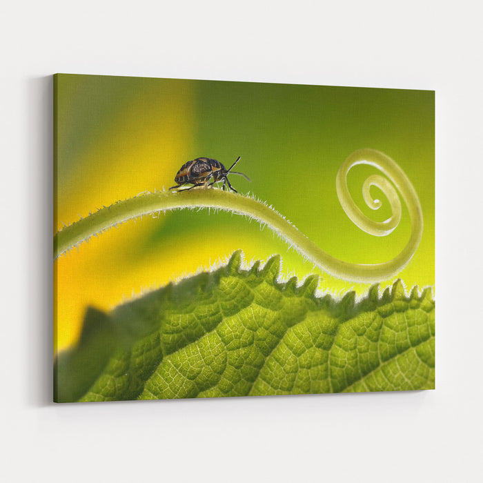 Beautiful Insects On A Leaf Closeup, Beautiful Glowing Background, Beautiful Light, Spiral Plant, Leaf Closeup Soft Dreamy Tender Artistic Image Form  For Postcard Or Wallpaper For Desktop Macro Canvas Wall Art Print