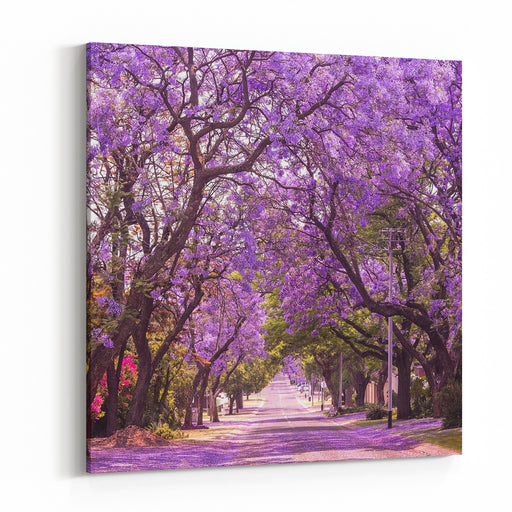 Stunning Alley With Wonderful Violet Vibrant Jacaranda In Bloom Tenderness Romantic Style Spring In South Africa Pretoria Artistic Retouching Ideal Background For Greeting Card Canvas Wall Art Print