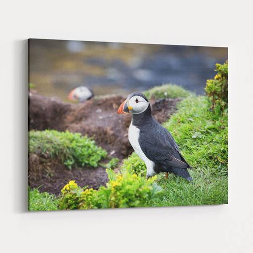 A Puffin On The Cliffs Of Treshnish Isle, Inner Hebrides, Scotland Canvas Wall Art Print