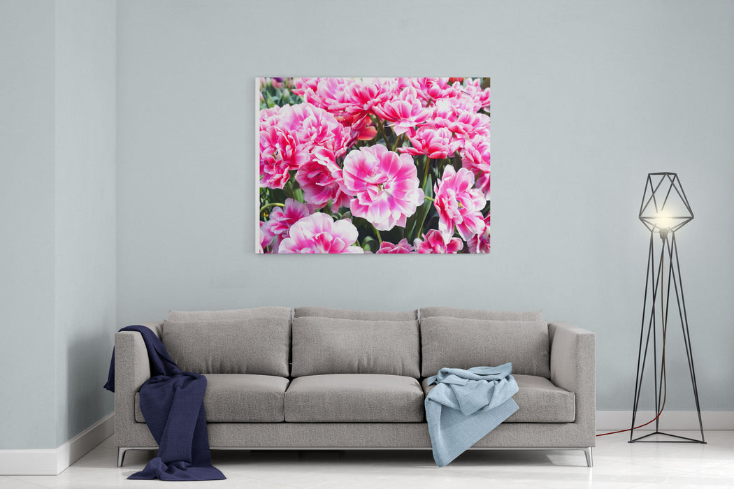Beautiful Pink Tulips In The Spring Time Canvas Wall Art Print