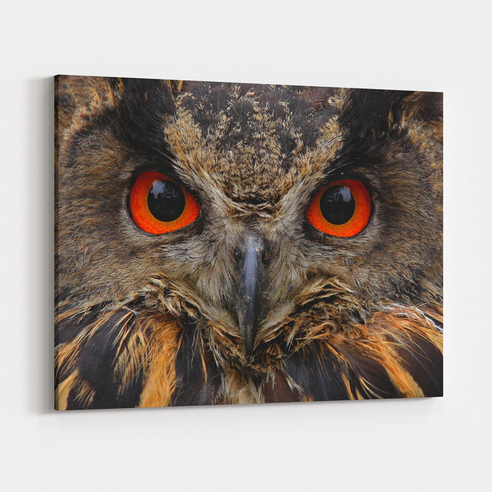 Detail Face Portrait Of Bird, Big Orange Eyes And Bill Eagle Owl, Bubo Bubo, Rare Wild Animal In The Nature Habitat, Germany Canvas Wall Art Print