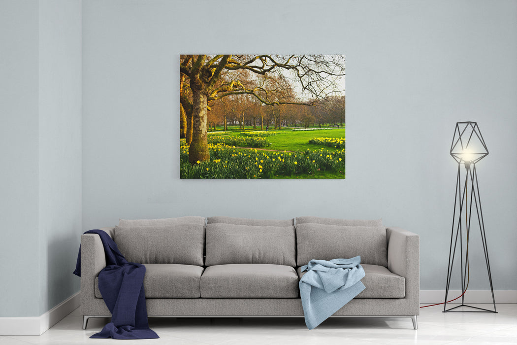 Blooming Daffodils In St Jamess Park In London Canvas Wall Art Print