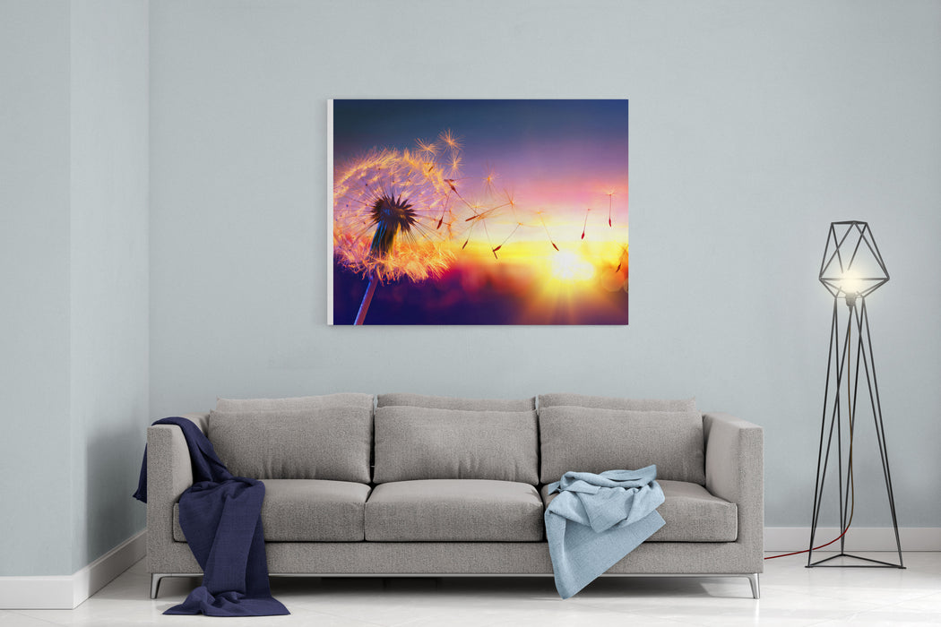 Dandelion To Sunset  Freedom To Wish Canvas Wall Art Print