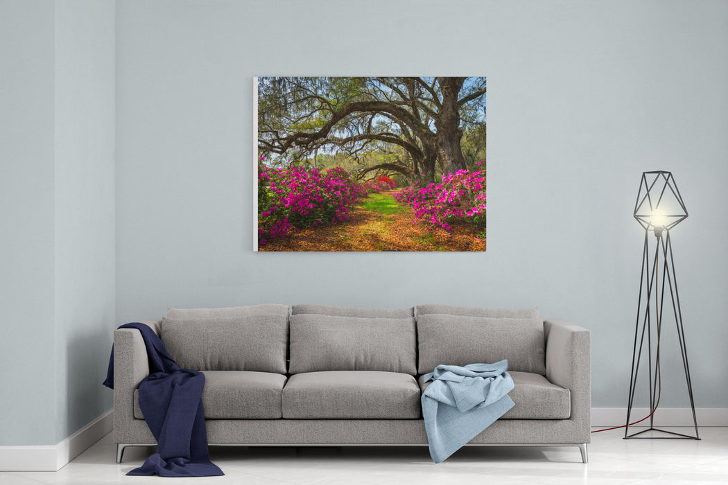 South Carolina Spring Flowers Charleston SC Lowcountry Scenic Nature Landscape With Blooming Pink Azaleas And Live Oak Trees With Spanish Moss Canvas Wall Art Print