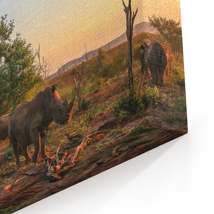 Rhino Herd Moving Around At Sunset Canvas Wall Art Print