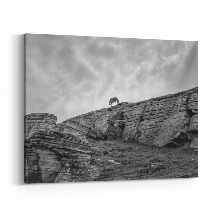 A Lone Horse Is Lahaul Valley Near The Rohtang Pass  Tibet, Leh District, Western Ladakh, Himalayas, Jammu And Kashmir, Northern India Black And White Canvas Wall Art Print