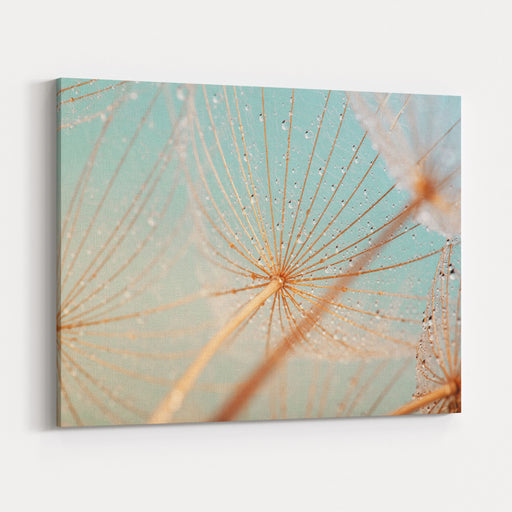 Dandelion Flower With Water Drops Canvas Wall Art Print