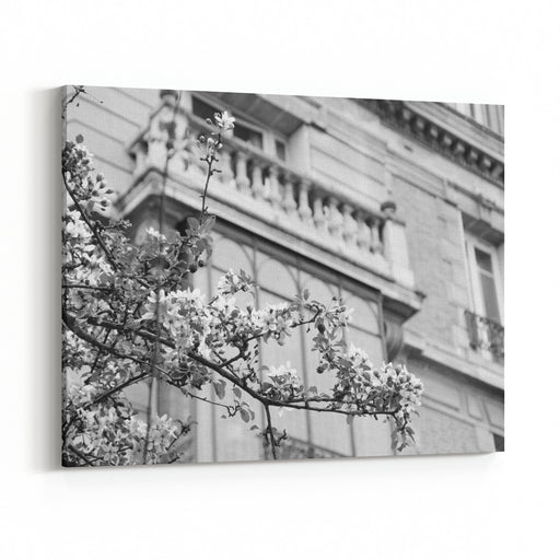 Spring In Paris Blossoming Sakura Tree And Typical Parisian Building Aged Photo Black And White Canvas Wall Art Print