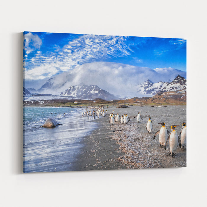 Katabatic Winds Encroach On St Andrews Bay On South Georgia Canvas Wall Art Print