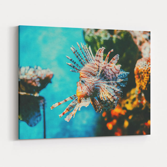 Lion Fish Hunting Among Coral Reefs Colorful Tropical Sea Life Underwater Photography Travel Inspiration Sea Ocean Wildlife Wallpaper Canvas Wall Art Print