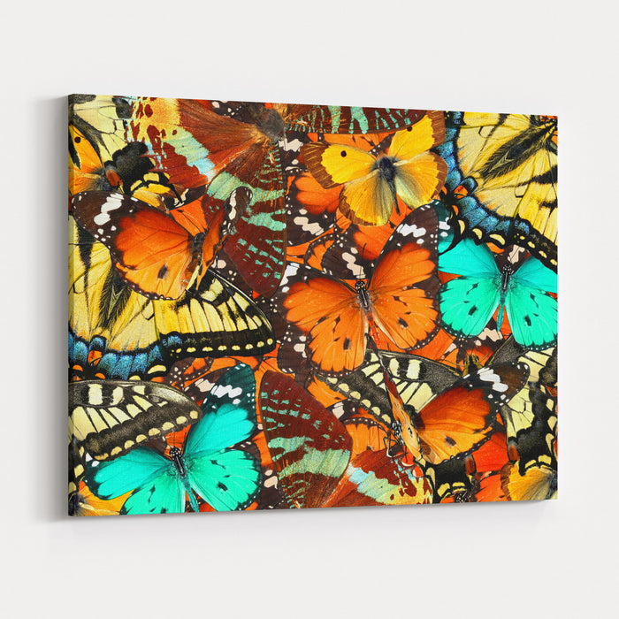 Colorful Butterflies Background Nature And Wildlife Insects Collection Abstract Canvas Wall Art Print