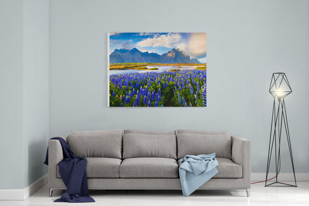 Panorama Of Blooming Lupine Flowers On The Stokksnes Headland On Southeastern Icelandic Coast Iceland, Europe Artistic Style Post Processed Photo Canvas Wall Art Print