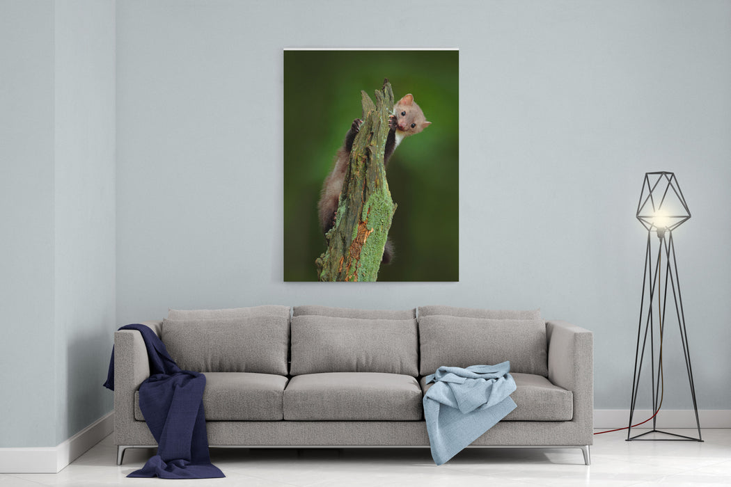 Beech Marten, Martes Foina, With Clear Green Background Small Predator Sitting On The Tree Trunk With Green Lichen In Forest Wildlife Scene From Germany Canvas Wall Art Print