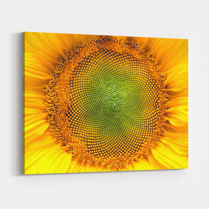 Core Of Of The Flower, Texture Sunflower Closeup Seeds And Oil Flat Lay, Top View Macro Canvas Wall Art Print
