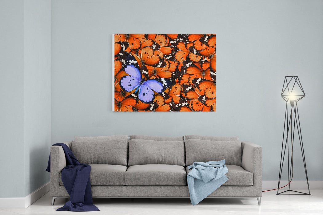 Lonely Lilac Butterfly Among Set Of Others Orange Used As A Background Different From Others Colors Wildlife Canvas Wall Art Print