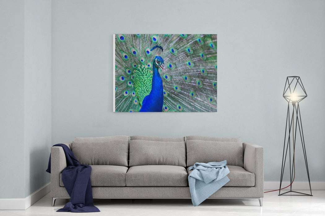 Close Up Of Beautiful Male Peacock With Feathers Canvas Wall Art Print