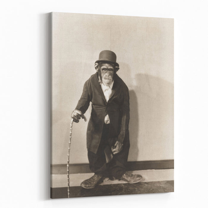 Monkey Dressed In Tight Overcoat And Bowler Hat Canvas Wall Art Print