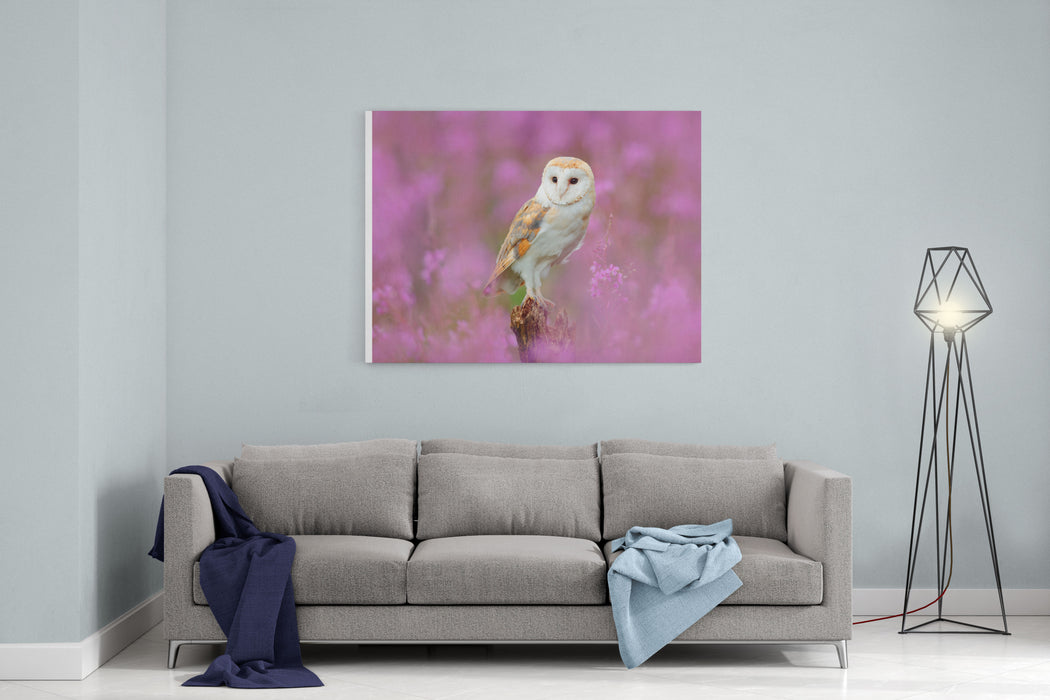 Beautiful Nature Scene With Owl And Pink Flowers Barn Owl In Light Pink Bloom, Clear Foreground And Background, Czech Republic Wildlife Art Scene From Nature With Bird Canvas Wall Art Print