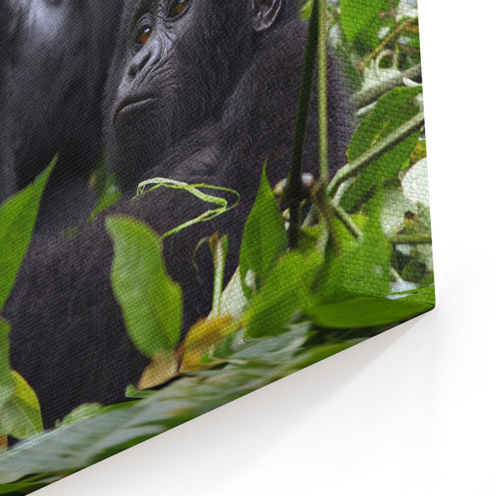 The Mountain Gorilla Gorilla Beringei Beringei, Mother With A Baby In The Green Canvas Wall Art Print