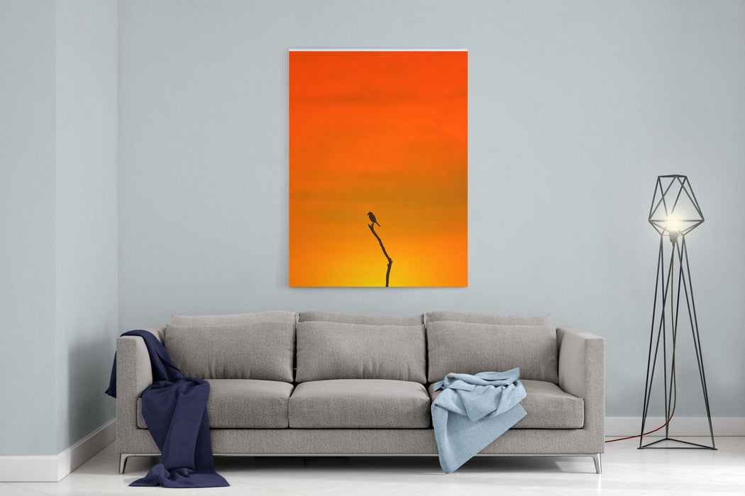 Bird Silhouette  Wildlife Background  Colors In Nature Canvas Wall Art Print