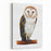 Barn Owl Drawing Tyto Alba Canvas Wall Art Print