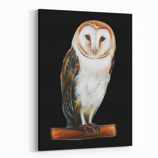 Barn Owl Drawing On Black Background Canvas Wall Art Print