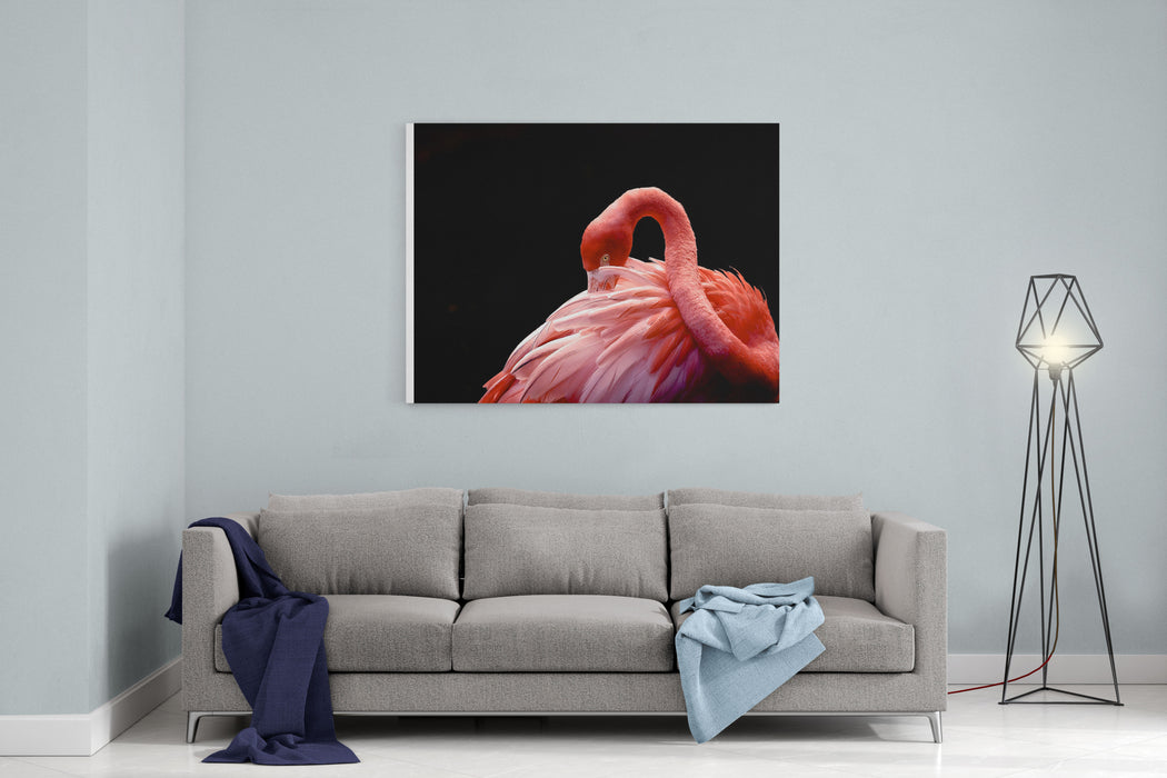 A Beautiful Flamingo Cleaning Its Feathers    Shy    American Flamingo Photographed At Flamingo Gardens Wildlife Sanctuary In Davie, FL Canvas Wall Art Print