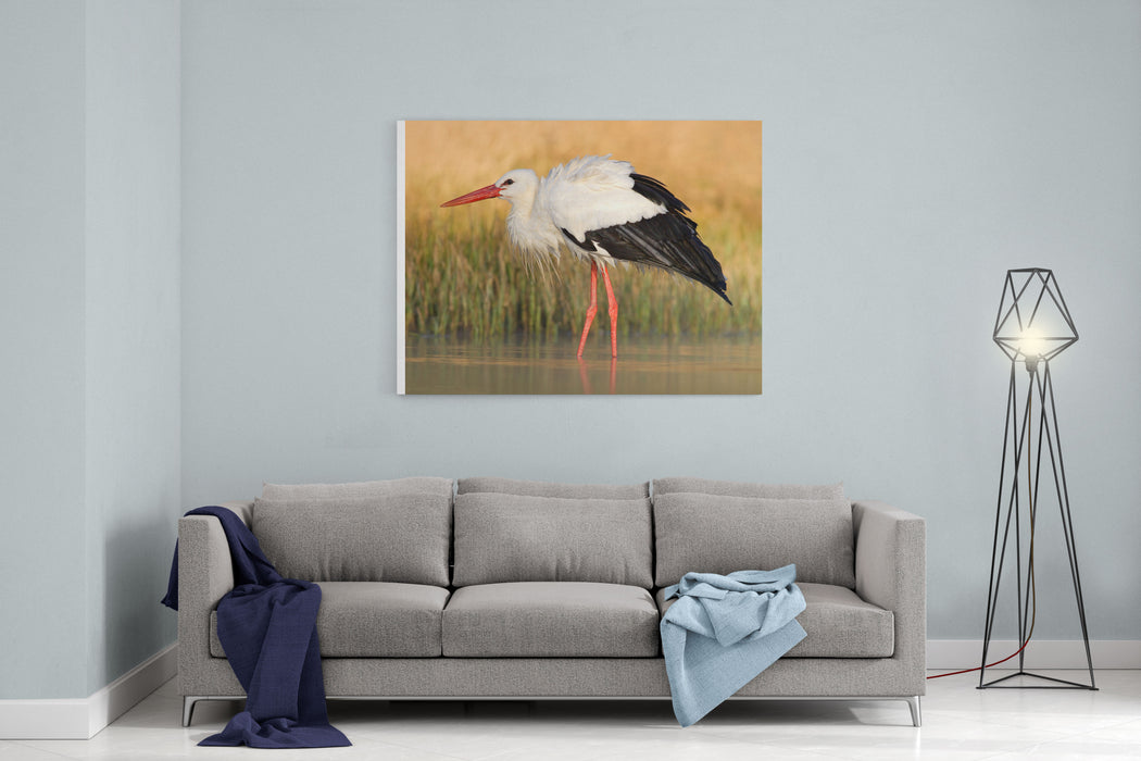 White Stork, Ciconia Ciconia, In The Lake In The Nature Habitat Wildlife Scene From The Nature Beautiful Morning Sun With Bird In The River Canvas Wall Art Print