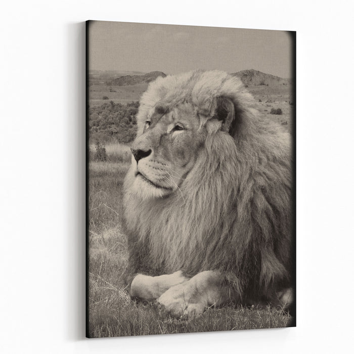 Amazing Vintage Photo Of A Beautiful African Lion In A National Park Creative Artwork Wonderful Image Of African Wildlife Sweet Memories Of Travel To Africa And African Safari Post Card Retro Canvas Wall Art Print