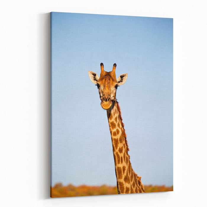Blur In South Africa   Kruger  Wildlife  Nature  Reserve And  Wild Giraffe Canvas Wall Art Print
