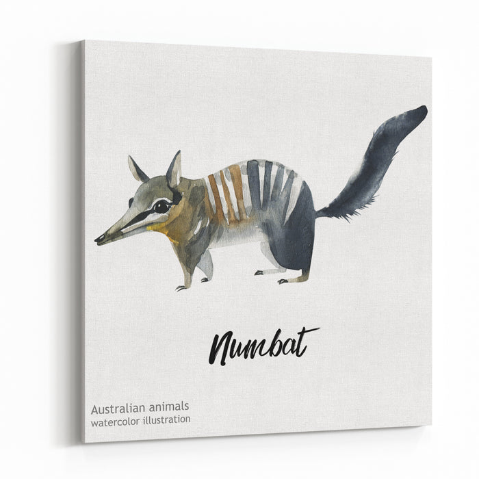 Australian Animals Watercolor Illustration Hand Drawn Wildlife Isolated On A White Background Numbat Canvas Wall Art Print