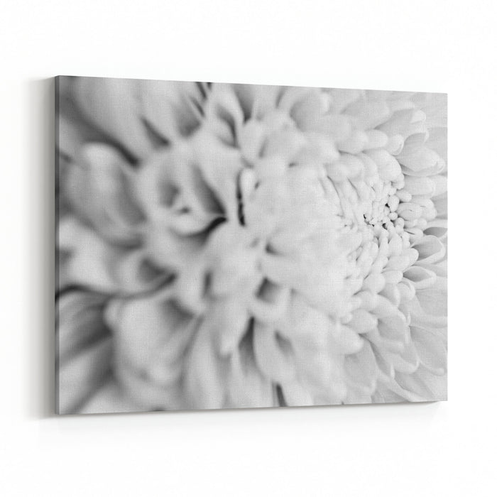 Close up black and white flower petal canvas wall art print close up black and white flower petal canvas wall art print mightylinksfo