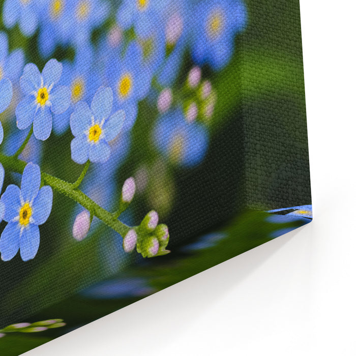 Meadow Plant Background Blue Little Flowers  Forgetmenot  Close Up And Green Grass Shallow DOF Canvas Wall Art Print