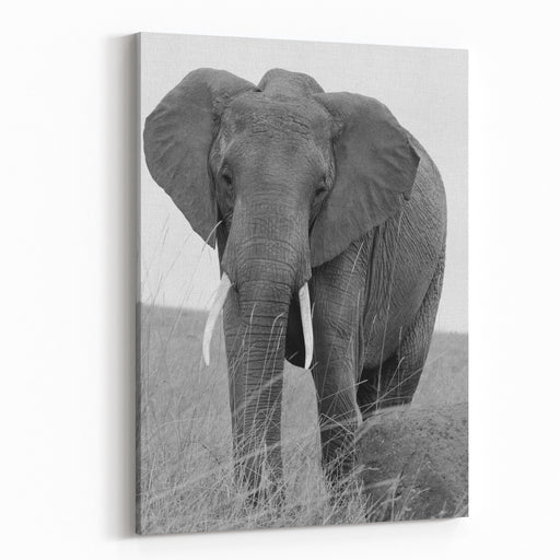 Lone Elephant Africana Loxodonta Standing On The Shoreline In Chobe National Park, Botswana, Souther Africa In Black  White Canvas Wall Art Print
