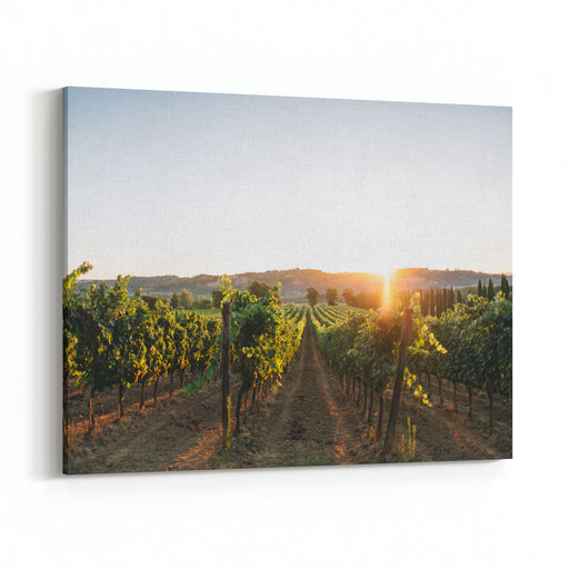 Vineyards In Tuscany Canvas Wall Art Print