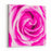 Closeup Fresh Pink Rose Texture Abstract Background Canvas Wall Art Print