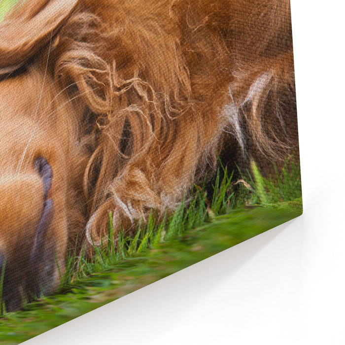 Dog Lieing On Its Side Looking Into The Camera Canvas Wall Art Print