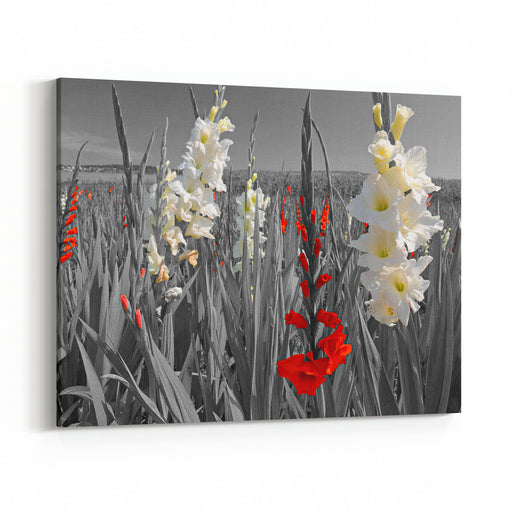 Bright White And Red Flower Blossoms In A Black And White Landscape Canvas Wall Art Print
