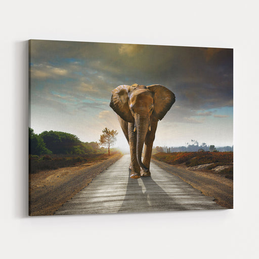 Single Elephant Walking In A Road With The Sun From Behind Canvas Wall Art Print