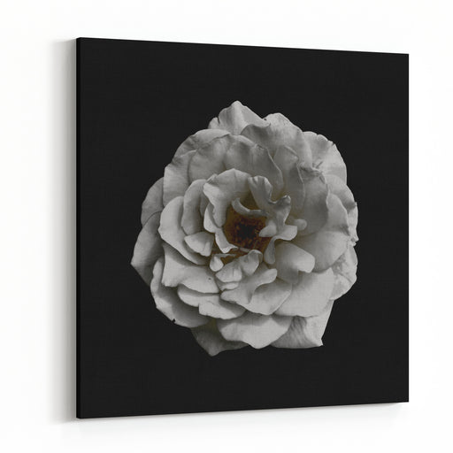 Black And White Rose On Black Background Canvas Wall Art Print