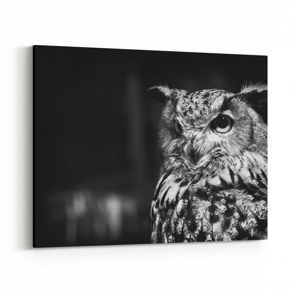 Black and white owl with big eyes canvas wall art print