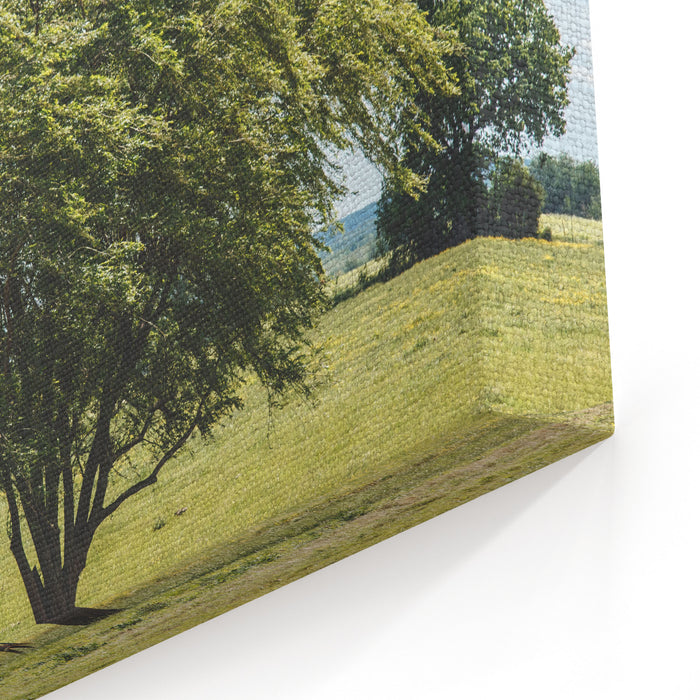 Landscape With A Tree Obviously Being Blown By The Wind In A Rural Pasture With A Couple Of Cows Near It Looking At The Camera Under Partly Cloudy Blue Skies Shot In Pryor, Oklahoma Canvas Wall Art Print