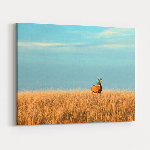 A Mule Deer Buck Stands In A Tall Bed Of Grass And Looks Into The Autumn Sun On The Great Plains Canvas Wall Art Print